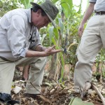 Analyses are needed that will identify the best college plot areas for selected crops in KARUCO's 1000 acres.