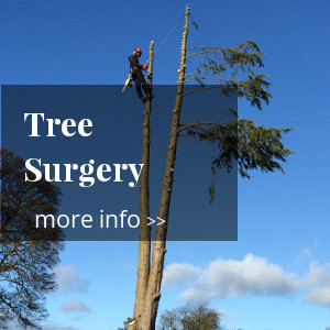shropshire tree surgeon