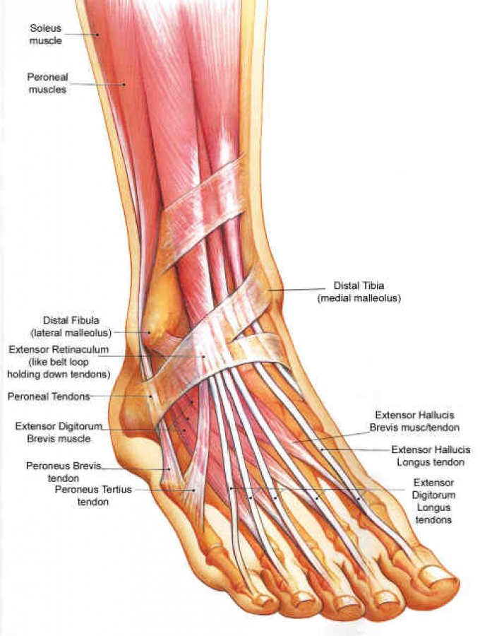 Ankle/Foot Conditions ProCare Rehabilitation
