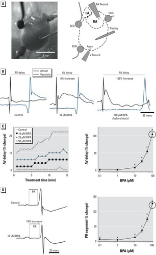 Bisphenol A Exposure and Cardiac Electrical Conduction in Excised