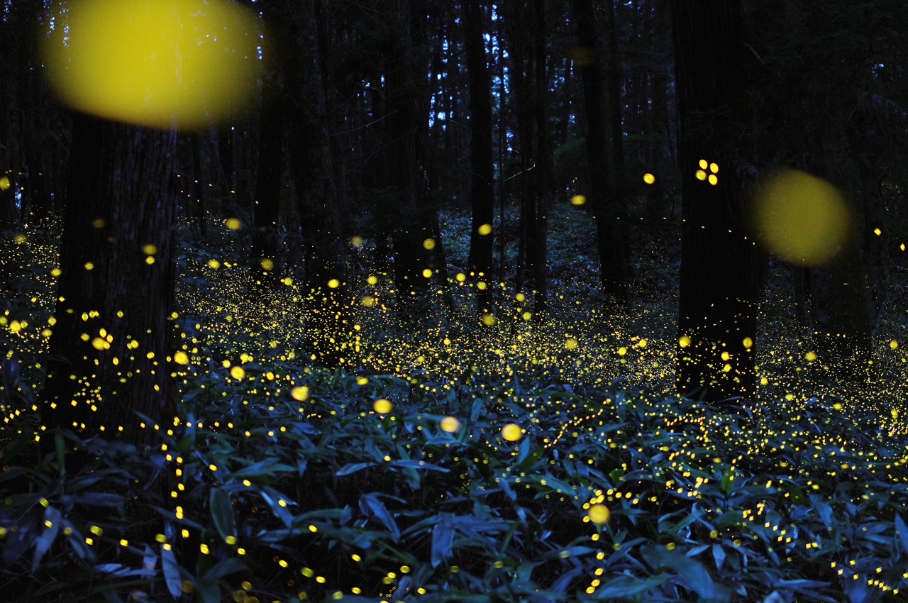 Firefly Insect At Night Starry Night With Gold Fireflies E Infinity
