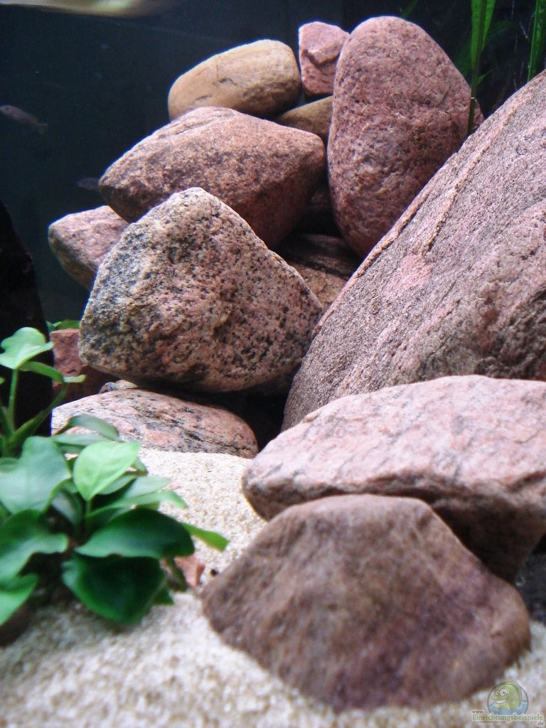 Aquarium Garten Example No 9554 From The Category Mixed East Africa Tanks