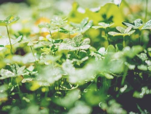 natur_grün_klee_sinn_nachdenken