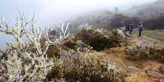 Helada afecta a 300 ha y 120 familias en Pucará