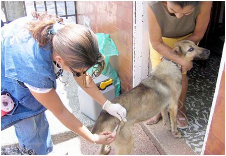 SEDES Potosí, confirman una persona infectada con rabia canina en el municipio de Atocha