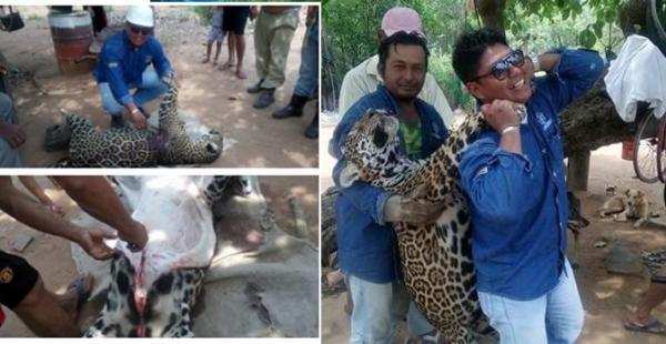 Hombre desollando a un jaguar causa indignación