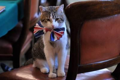 """Larry, el """"cazador de ratones en jefe de la sede del gobierno"""" británico./ AFP"""