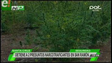 Destruyen 9 toneladas de marihuana en San Ramón