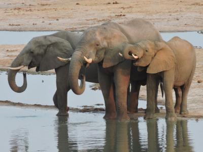 elefantes-1_0