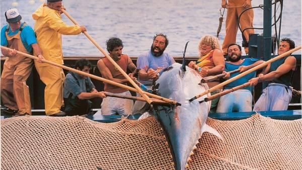 La isla del atún / Cézaro de Luca