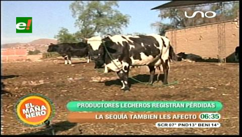 Cochabamba: Productores de leche pierden Bs 5 millones al mes