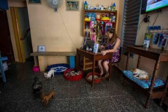 Lourdes Ortega en su casa, cuida a beagles, chihuahuas y salchichas en La Habana. / AP