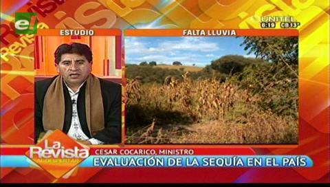 Ministro Cocarico afirma que la producción de carne de pollo y res está garantizada
