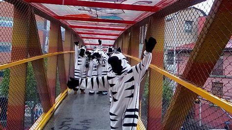 Con el apoyo de las Cebras de La Paz, comenzó la campaña para promover el uso de las pasarelas Foto: GAMLP