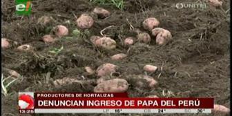 Contrabando: Denuncian ingreso de papa peruana al país