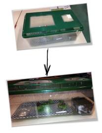 Sciences : Les escargots-observations