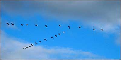 birdmigrationhome