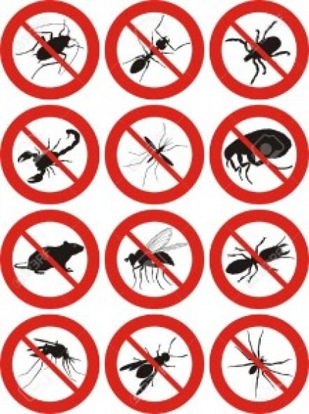 شركة,مكافحة,الحشرات,بالخبر