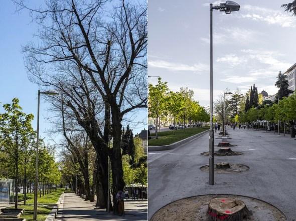 Dos vistas del mismo lugar del Paseo del Prado antes y después de la tala del Ayuntamiento. Foto: José Manuel Ballester.