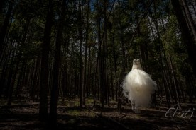 Wedding Dress Hanging in Woods