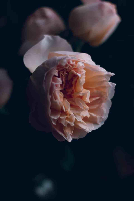 rose_garden_cake-3612