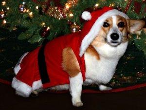 Traditions, senior help, elderly assistance, holidays