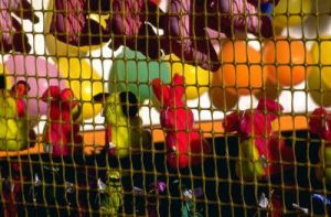 EldercareABCblog.com Carnival