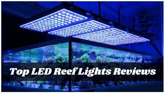 The 7 Best Led Reef Lights 2021 Reviews Buying Guide