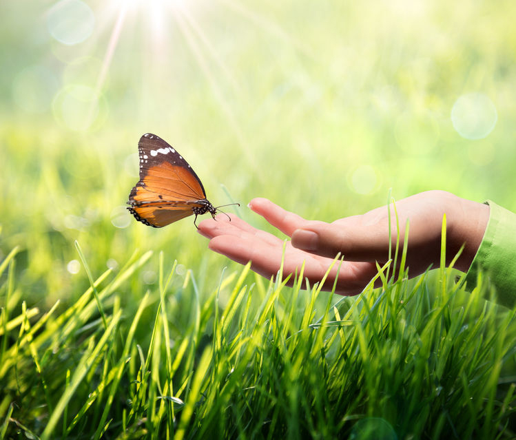25451299 - butterfly in hand on grass