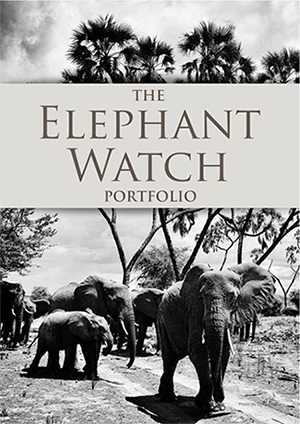 Elephant Watch Portfolio, Elephant Watch Camp, Olerai House, Boutique Safaris, wild safaris, wildlife safaris, conservation, Samburu National Reserve, Big Five, Africa, safaris, travel, Naivasha, Nairobi, Kenya, Maasai Mara