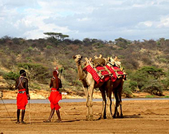 Elephant Watch Camp, Samburu National Reserve, wildlife, wild safaris, wildlife safaris, conservation, Elephant Watch Portfolio, Nairobi, Kenya, experience, activities, bush breakfast, picnics, outdoors, food, gourmet food, cuisine, camels, camel walks