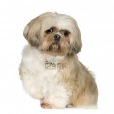 image régle éducative du chien
