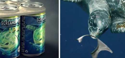 A embalagem de cerveja comestível que promete reduzir mortes de animais marinhos