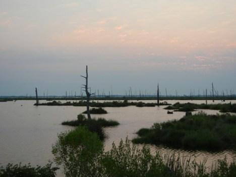 Louisiana Marsh. Credit: ELI
