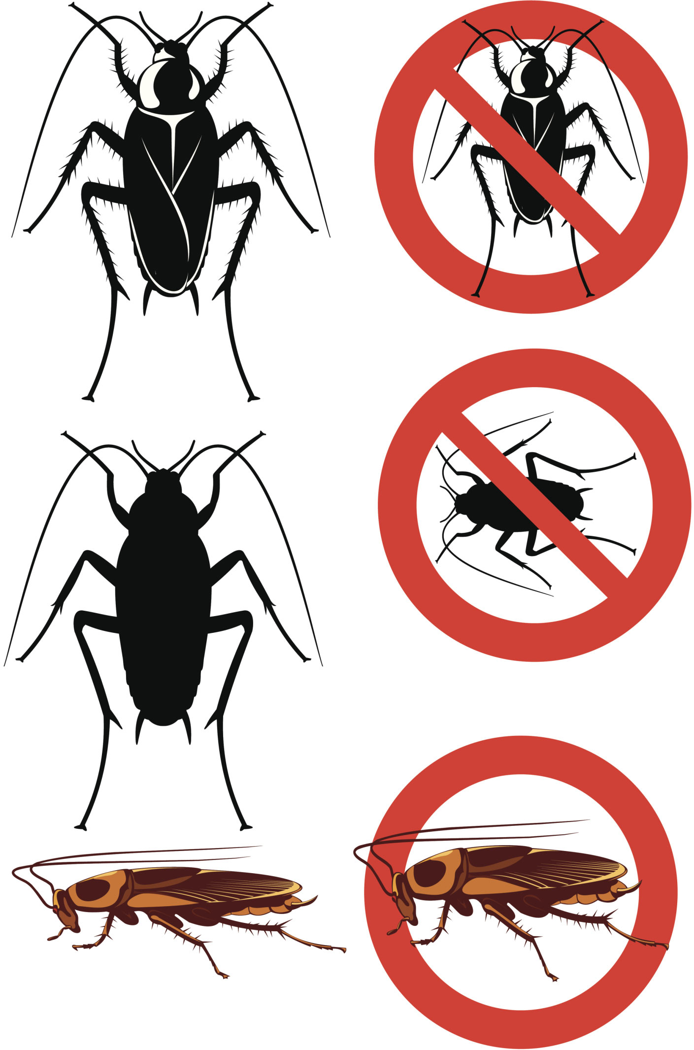5 Ways to Get Rid of Cockroaches