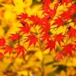 紅葉が見れる福岡の公園オススメは?見頃の時期や穴場を調査!