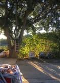 Post-harvest morning light near the cellar, vineyards - Gressac