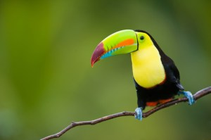 Eduardo Rivera/Shutterstock