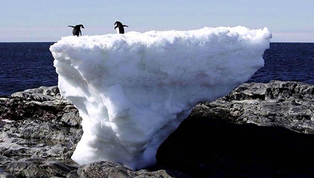 FOTO: Reuters. El deshielo está destruyendo los hábitats de muchas especies