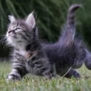 El lenguaje corporal de los gatos-Feliway