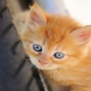 gatito naranja