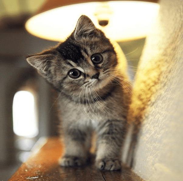 Frontline Spray Cat Uk