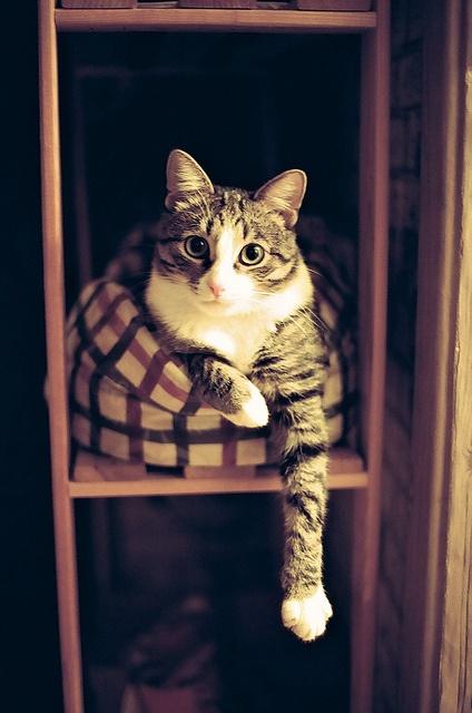 Feliway - Gato en las alturas