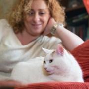 Feliway - cómo introducir un gato en casa - mudanza