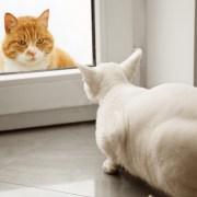 Feliway Friends - ¿cómo consigo que mis gatos se lleven bien?
