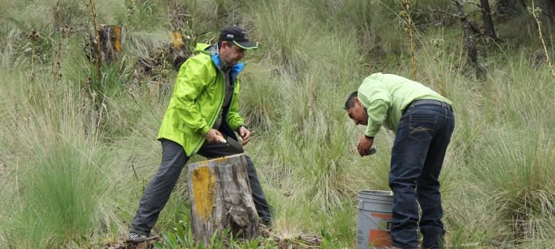 Aguacateras no alcanzarán zonas protegidas en el Nevado: SEMADET