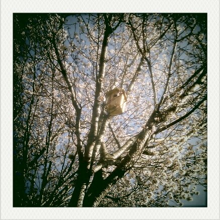 Things to do in dublin - visit the bird garden. photo of birdhouse in cherry blossom tree with blossoms