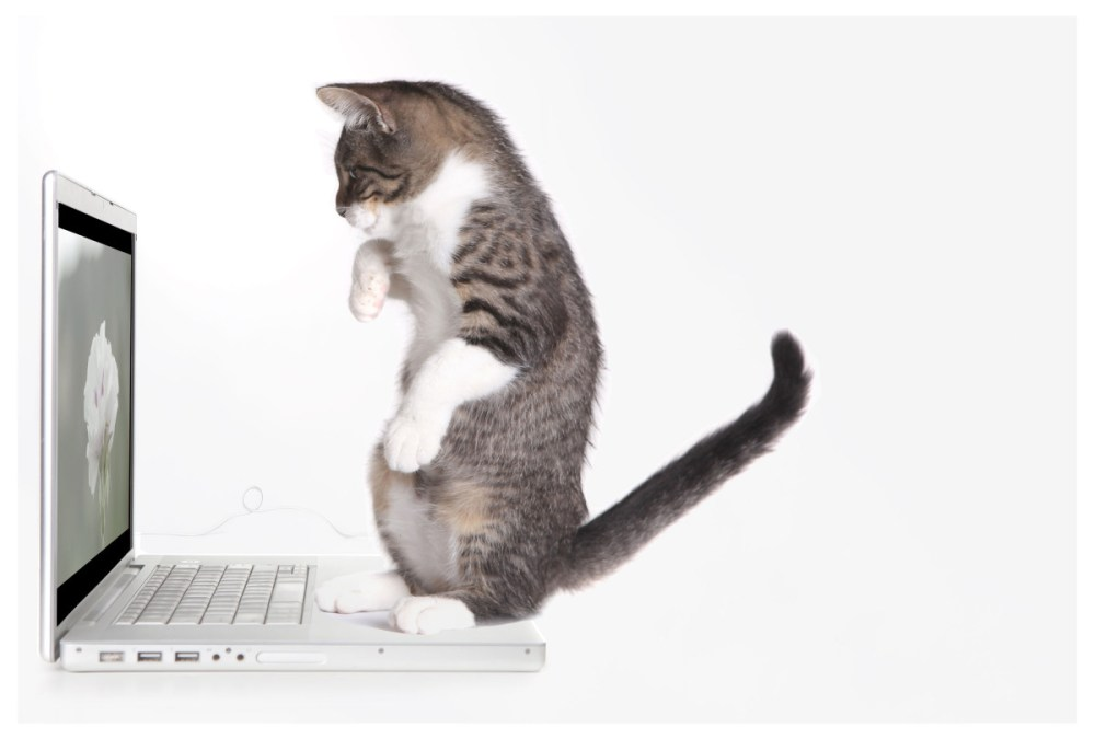 Cat-and-Laptop-for-BMPCC-Post-Web