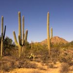 View on the Desert Discovery Trail at Saguaro National Park