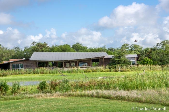McAllen Revisited: South Texas Birding Update